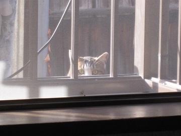 近所の猫(3)