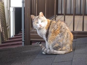 近所の猫(1)