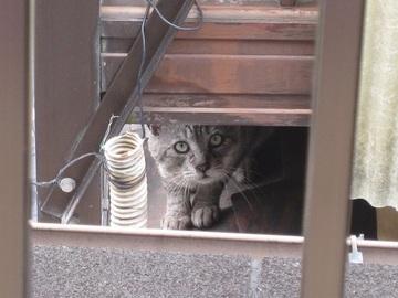 近所の猫(2)