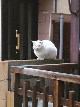 近所の猫(4)