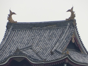 daitennsyu3.jpg